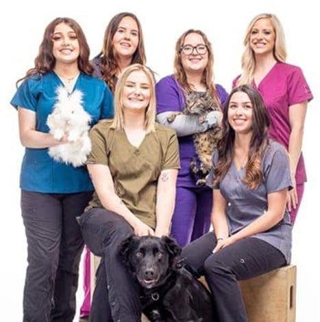 VeterinaryHospitalAssistantCAT