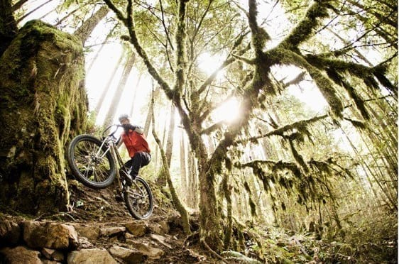 Mountain biker under a huge moss covered tree.